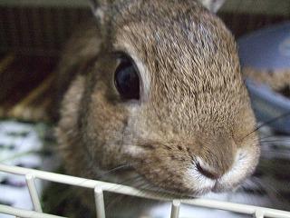 2010_0510ひろこ0012.jpg